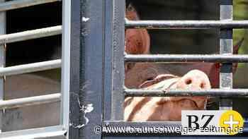 Kein staatliches Siegel: Vergebene Jahre fürs Tierwohl