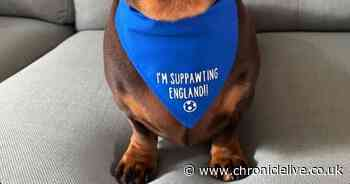 How our dogs can supp-awt their team in the Euros