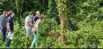 A Magny le Hongre, 250 arbres malades doivent être abattus - actu.fr