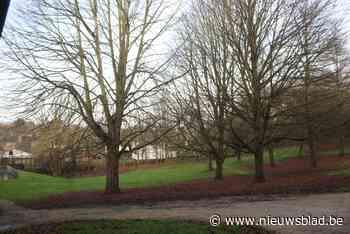 Troostplek in Boesdaalpark - Het Nieuwsblad