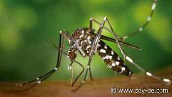 Vuelve la temporada de los mosquitos tigre, ¿Quieres saber como evitarlos? - Soyde.