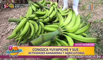 D'Mañana desde Huánuco: conozca a Yuyapichis y sus actividades ganaderas y agrícolas - Panamericana Televisión