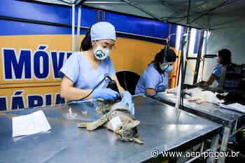 CastraPet encerra 1ª fase em São José dos Pinhais; ciclo teve 15 mil animais esterilizados - Agência Estadual de Notícias do Estado do Paraná