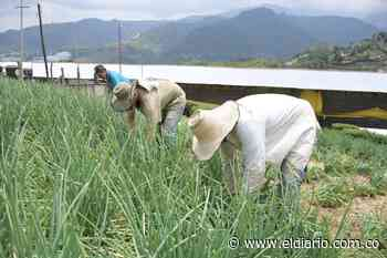 Los bloqueos en vías tienen en alto riesgo el sector agricultor - El Diario de Otún
