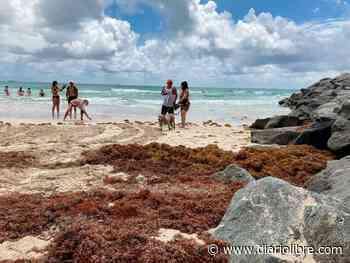 Florida emite alerta por el alto nivel de algas tóxicas en su lago más grande - Diario Libre