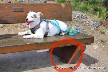 Dog bit by baby rattler at popular Vernon park – Sicamous Eagle Valley News - Sicamous Eagle Valley News