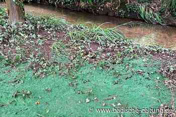 Regen spült Kunstrasen-Granulat in die Natur – SC Freiburg muss aufräumen - Freiburg - Badische Zeitung