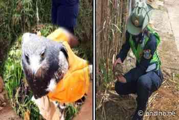 Policía Ambiental rescata tortuga y águila en Amazonas y Cajamarca - Agencia Andina