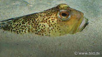 Einsatz für die Seenotretter: Giftiger Fisch sticht Angler vor Fehmarn - BILD