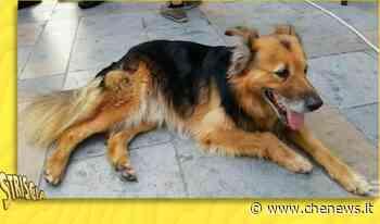 """La storia di Whisky, il cane mascotte di Carini: """"è un essere speciale"""" - CheNews.it"""