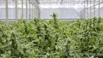 Dietzenbach: Marihuana-Plantage fliegt auf: Bewährung dank schlechter Qualität - op-online.de