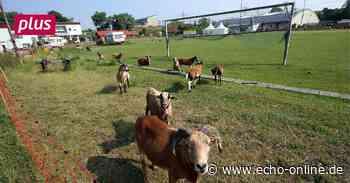 Bischofsheim Im ESV Bischofsheim herrscht Aufbruchstimmung - Echo Online