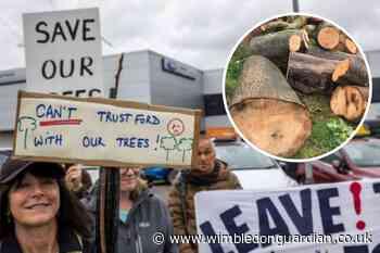 Merton launch investigation over Trust Ford tree destruction - Wimbledon Guardian