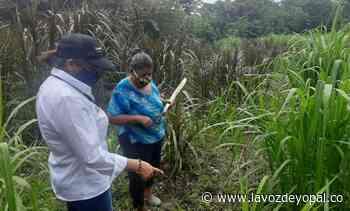 Familias de Isla Turbayista, en Aguazul, se formaron en competencias productivas - Noticias de casanare | La voz de yopal - La Voz De Yopal