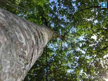 Mitmach-Aktion in Wiefelstede: Grüne suchen Standorte für Bäume - Nordwest-Zeitung