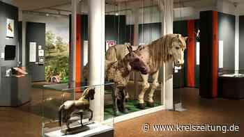"""Deutsches Pferdemuseum in Verden: """"Legendär!"""" – von Halla bis Mr. Ed - kreiszeitung.de"""