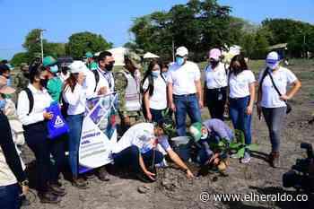 Jornada de siembra de árboles en Malambo - EL HERALDO