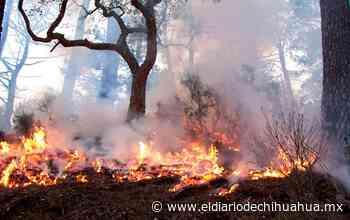 Pide Cruz Roja apoyo para afectados por los incendios en la sierra - El Diario de Chihuahua