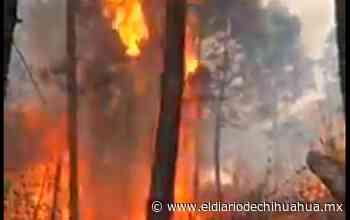 Video: Viralizan imágenes del incendio en la Sierra Tamahumara - El Diario de Chihuahua