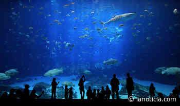 Carolina del Norte tiene los mejores acuarios en el país - La Noticia