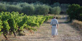 O vinhedo papal mais antigo mistura caridade com vinho premiado - Aleteia