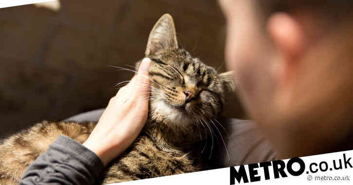 Why do cats knead with their paws?