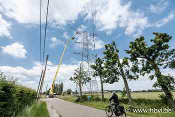 Versterking Limburgse hoogspanningslijn stap naar Europees stroomnet - Het Belang van Limburg