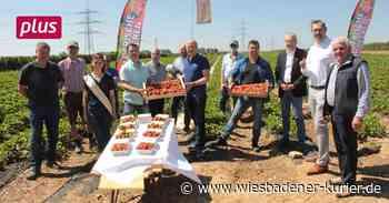 Obstbauern in Kriftel: Schwierigkeiten bei der Erdbeerernte - Wiesbadener Kurier