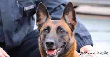 Hausdurchsuchung: Polizei erwischt mutmaßliche Drogendealer aus Brakel - Neue Westfälische