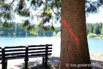 Borkenkäfer: Bäume müssen gefällt werden - GZ Live