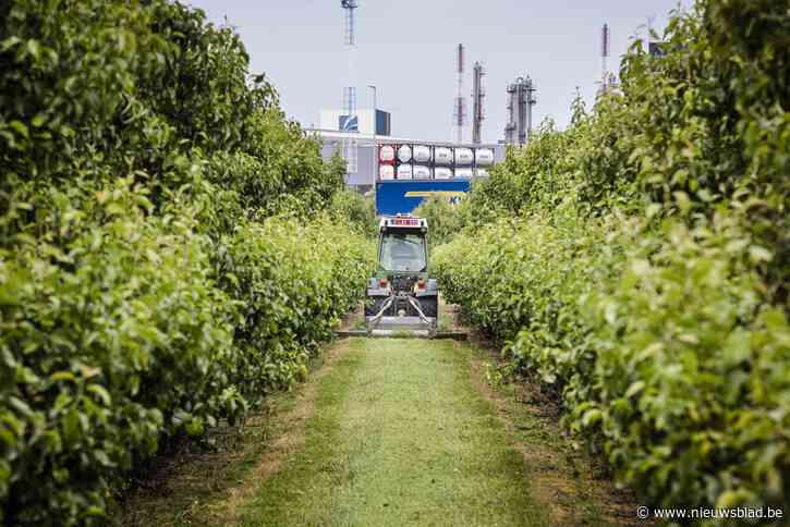 """Onrust bij boeren in Zwijndrecht: """"Als ze morgen iets vinden in mijn fruit, is het gedaan met mijn bedrijf door de schuld van een ander"""""""
