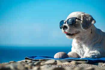 Oldham vet shares symptoms of heatstroke in dogs - theoldhamtimes.co.uk