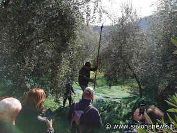 Andora, alla scoperta dell'entroterra con la merenda nell'oliveta - SavonaNews.it