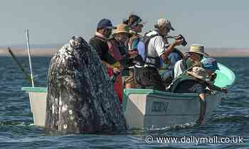 It's behind you! Hilarious moment sneaky whale pops up behind sightseers as they look the wrong way
