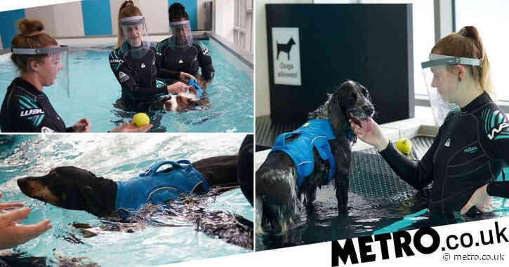 Abandoned dogs try underwater treadmills to get back on their paws