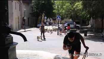 Le troupeau de Dimitri sur le chemin de l'estive - Midi Libre