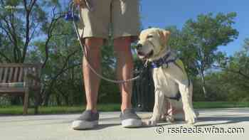 How to keep your dog safe during rising temperatures this summer