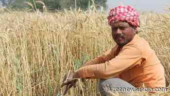 PM Kisan Yojana: Beneficiaries could land in jail if they're found doing THIS