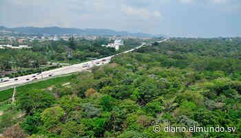 280 árboles del Bosque Los Pericos en la Avenida Jerusalén serán talados por construcción de rampas - Diario El Mundo
