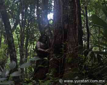Koox Films crea campamento para 20 participantes - El Diario de Yucatán