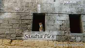 Un gato, pequeño coloso en la poesía de Pien - ámbito.com