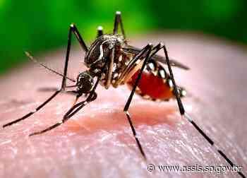 Assis registra 517 casos positivos de dengue e 126 aguardam resultados - Prefeitura de Assis