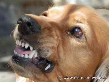 Freilaufender Hund beißt Kind in Altensteig - die neue welle - die neue welle