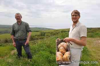 Farmers trial ancient grain varieties grown in Wales