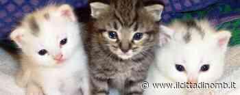 Monza, tate per gattini cercansi alla nursery di Sant'Albino - Il Cittadino di Monza e Brianza