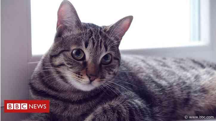 Shops recall pet food linked to rare cat disease - BBC News
