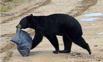 Bear sighting spark warning for Kelowna residents to manage attractants - Kelowna News - Castanet.net