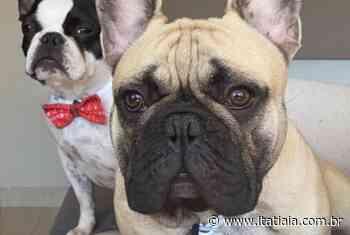 Cães se perdem em Contagem, e dona oferece gratificação a quem encontrá-los - Rádio Itatiaia