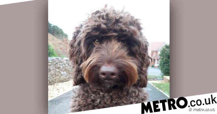 Hero dog helps save life of suicidal woman on M5 bridge