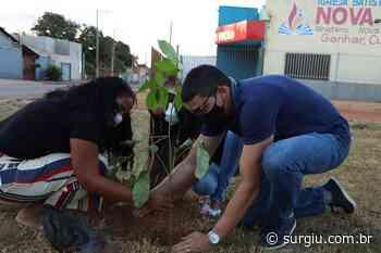 Prefeitura de Porto Nacional realiza plantio de mudas de árvores na Praça da Juventude - Surgiu